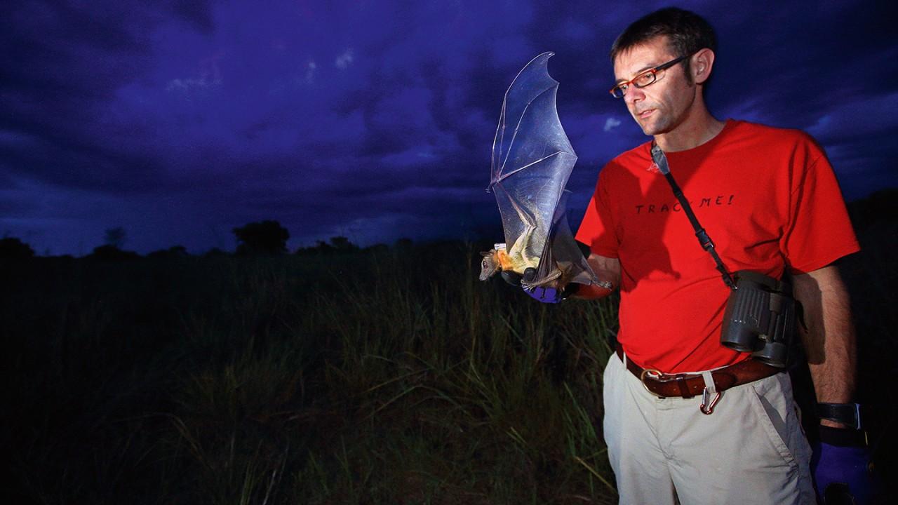 研究果蝠行踪的 ICARUS 项目负责人 Martin Wikelski 博士。